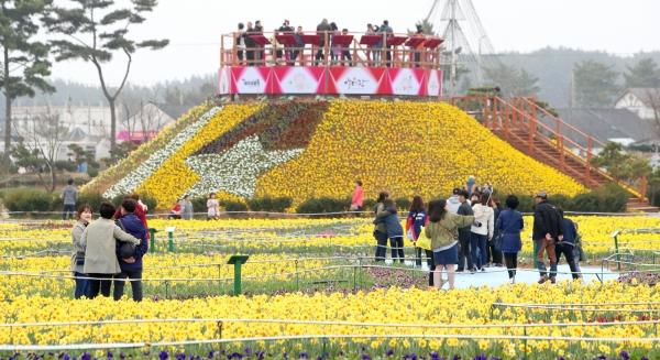 지난해 네이처월드의 수선화 축제 모습